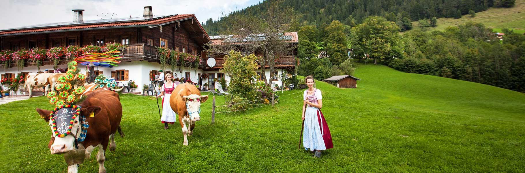 Header Webseite Hasenlehen Foto Almabtrieb